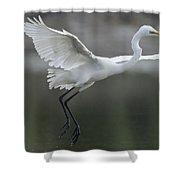 Great Egret Landing Sarawak Borneo Shower Curtain