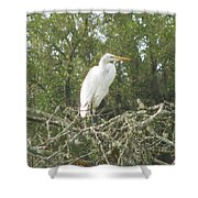 Great Egret Lookout Shower Curtain