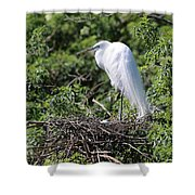 Great Egret Nest Shower Curtain