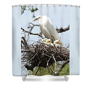 Great Egret Nest With Chicks And Mama Shower Curtain
