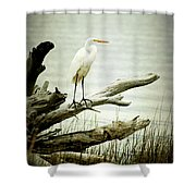 Great Egret On A Fallen Tree Shower Curtain by Joan McCool