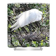 Great Egret On Nest Shower Curtain