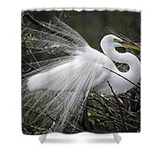Great Egret Preening Shower Curtain