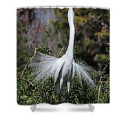 Great Egret Showoff Shower Curtain