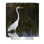 Great Egret Standing Out Shower Curtain