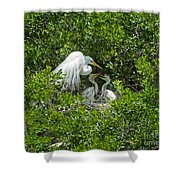 Great Egret With Chicks On The Nest Shower Curtain