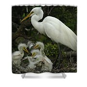 Great Egret With Young Shower Curtain