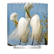 Great Egrets At Nest Shower Curtain