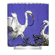 Great Egrets Nesting Shower Curtain