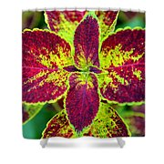 Great Expectations Coleus Shower Curtain