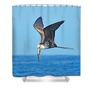 Great Frigate Bird Shower Curtain