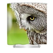 Great Gray Owl Close Up Shower Curtain