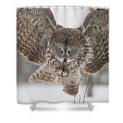 Great Gray Owl Pictures 634 Shower Curtain