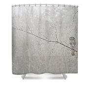 Great Gray Owl Pictures 645 Shower Curtain
