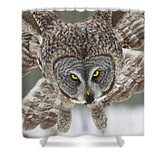 Great Gray Owl Pictures 648 Shower Curtain