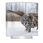 Great Gray Owl Pictures 658 Shower Curtain