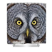 Great Gray Owl Pictures 680 Shower Curtain