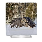 Great Gray Owl Pictures 740 Shower Curtain