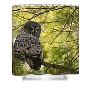 Great Gray Owl Pictures 779 Shower Curtain