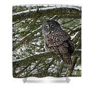Great Gray Owl Pictures 780 Shower Curtain