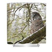 Great Gray Owl Pictures 804 Shower Curtain