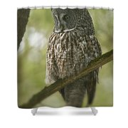 Great Gray Owl Pictures 823 Shower Curtain
