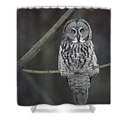 Great Gray Owl Portrait North America Shower Curtain