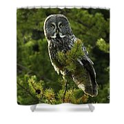 Great Grey Owl On The Hunt Shower Curtain
