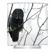 Great Grey Owl On The Lookout Shower Curtain
