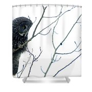 Great Grey Owl On Watch Shower Curtain
