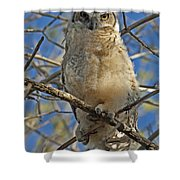 Great Horned Owl 2 Shower Curtain