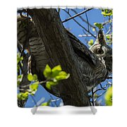 Great Horned Owl 5 Shower Curtain