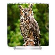 Great Horned Owl Shower Curtain