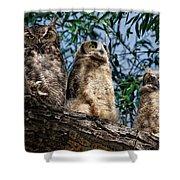 Great Horned Owl Family Shower Curtain