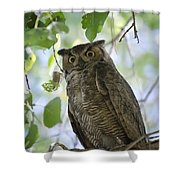 Great Horned Owl On A Branch  Shower Curtain