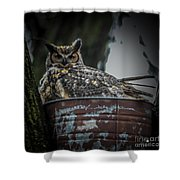 Great Horned Owl On Nest Shower Curtain