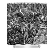 Great Horned Owl V7 Shower Curtain