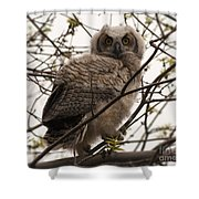 Great Horned Owlet 2 Shower Curtain