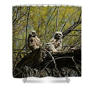 Great Horned Owlets 1 Shower Curtain