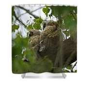 Great Horned Owlets 5 20 2011 Shower Curtain