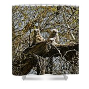 Great Horned Owlets Photo Shower Curtain