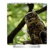 Great Horned Youngster Shower Curtain