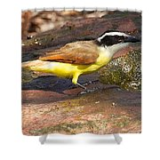 Great Kiskadee Shower Curtain