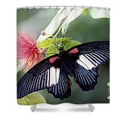 Great Mormon And Mimosa - Fs000581 Shower Curtain