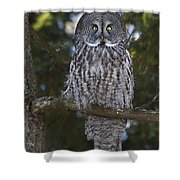 Great Owl Eyes Shower Curtain