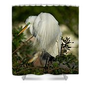 Great Egret Takes A Stance Shower Curtain