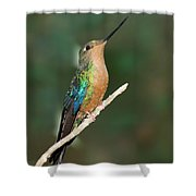 Great Sapphirewing Shower Curtain
