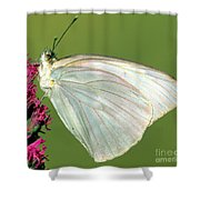 Great Southern White Butterfly Shower Curtain