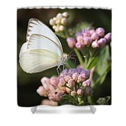 Great Southern White Butterfly On Pink Flowers Shower Curtain