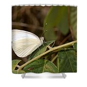 Great Southern White Butterfly Shower Curtain by Rudy Umans